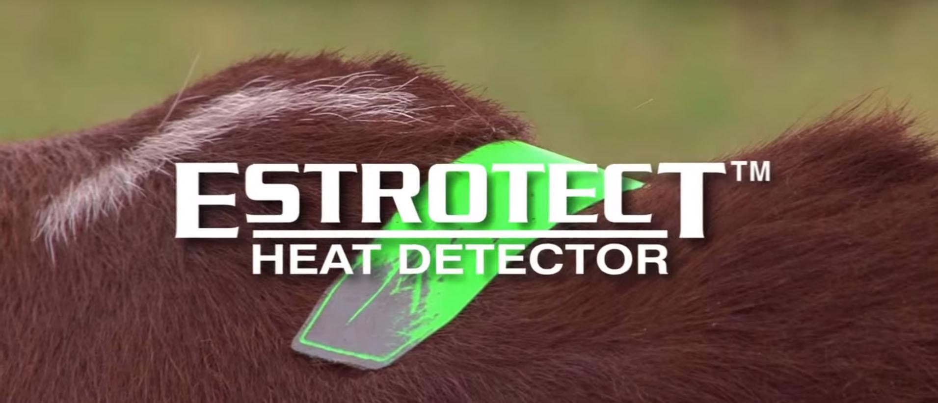 Estrotech Cover