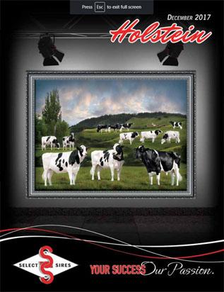 HolsteinDirectory